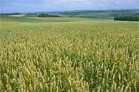 農地イメージ